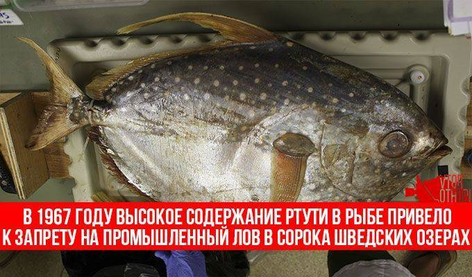 Отравленная ртутью рыба может стать причиной интоксикации