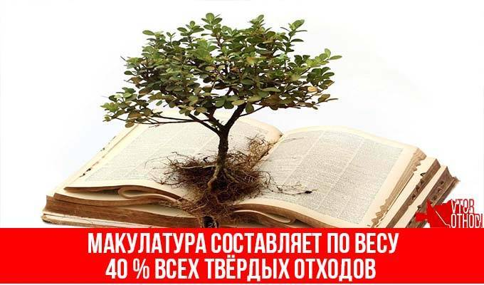 Сдавая макулатуру вы спасаете деревья