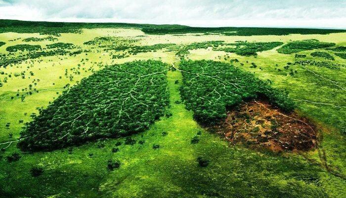 Ухудшение экосистемы